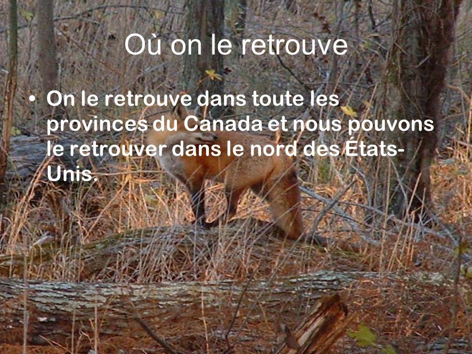 Où on le retrouve On le retrouve dans toute les provinces du Canada et nous pouvons le retrouver dans le nord des États-Unis.