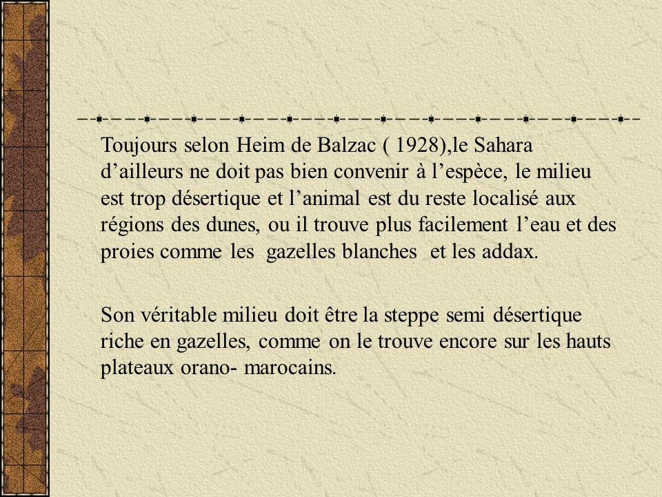 Toujours selon Heim de Balzac ( 1928),le Sahara d'ailleurs ne doit pas bien convenir à l'espèce, le milieu est trop désertique et l'animal est du reste localisé aux régions des dunes, ou il trouve plus facilement l'eau et des proies comme les gazelles blanches et les addax.