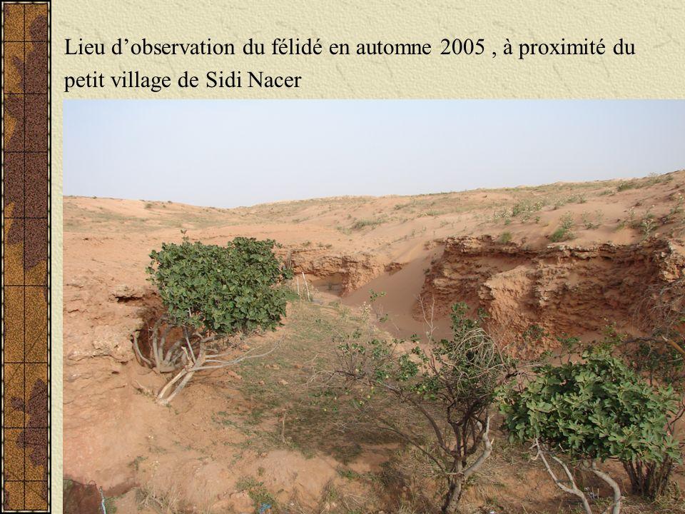 Lieu d'observation du félidé en automne 2005 , à proximité du
