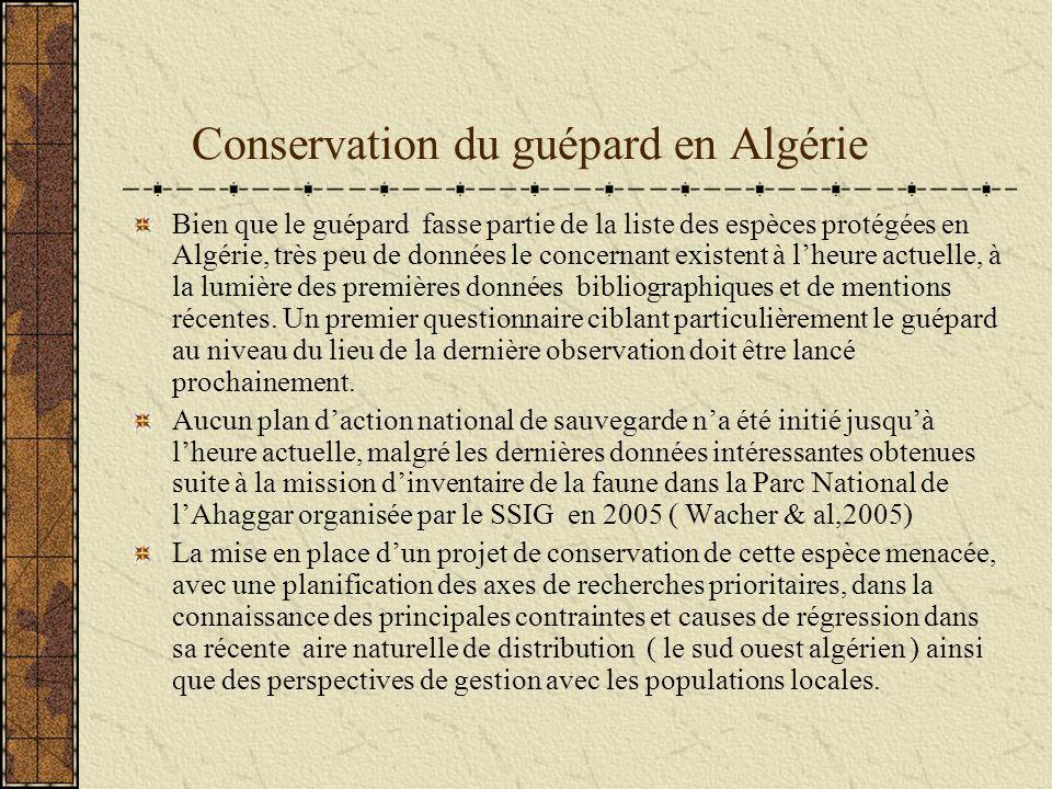Conservation du guépard en Algérie