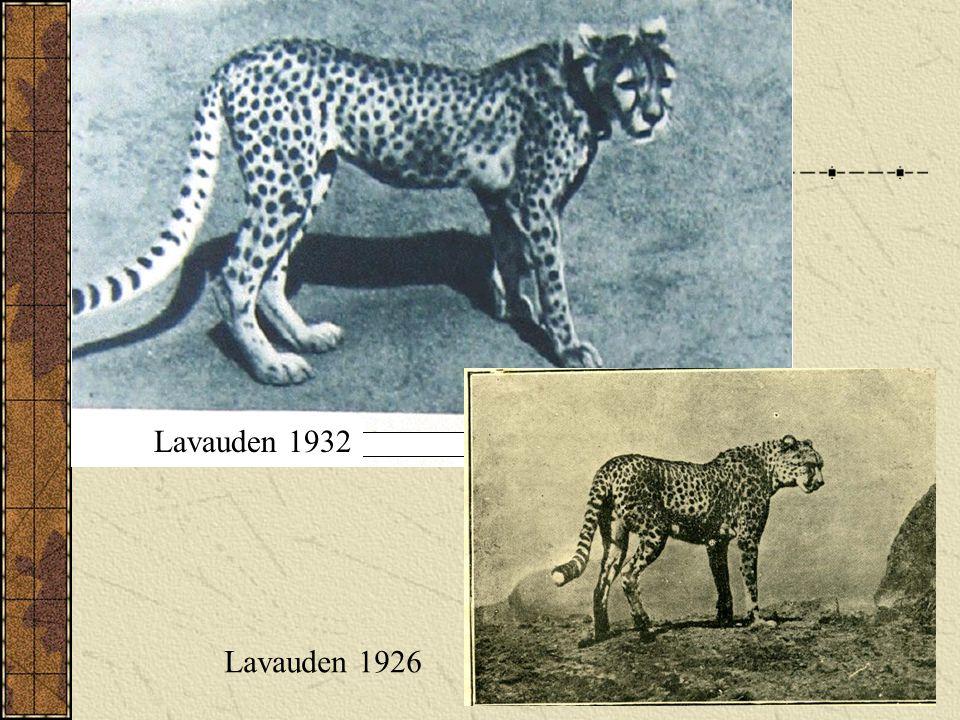 Lavauden 1932 Lavauden 1932 Lavauden 1926