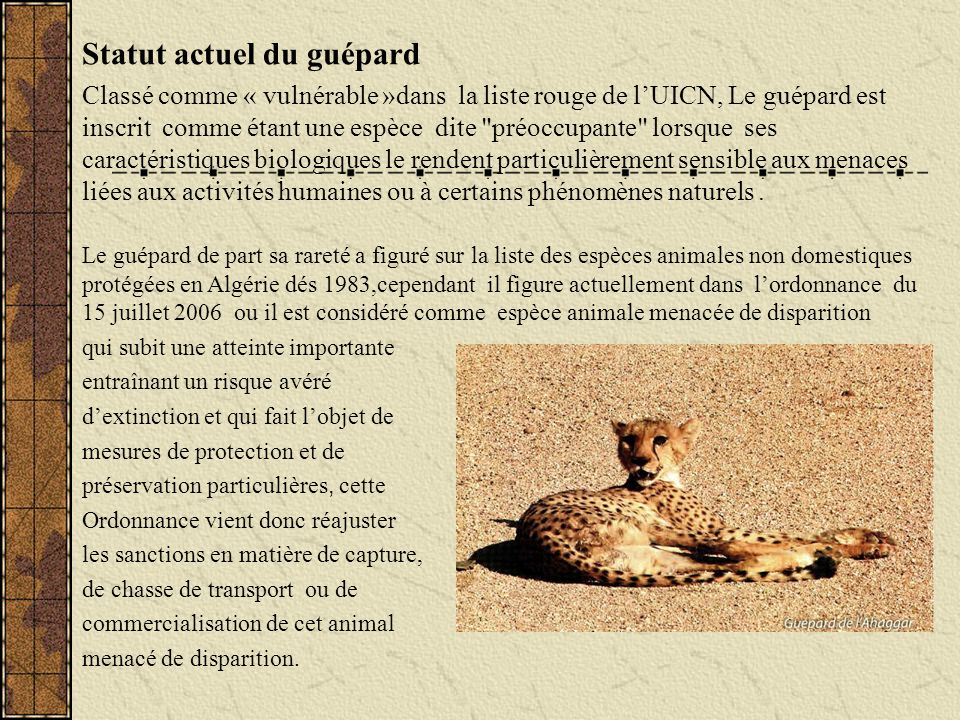 Statut actuel du guépard