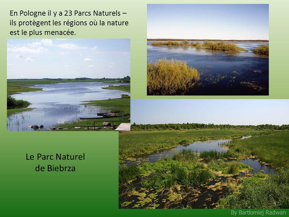 Le Parc Naturel de Biebrza