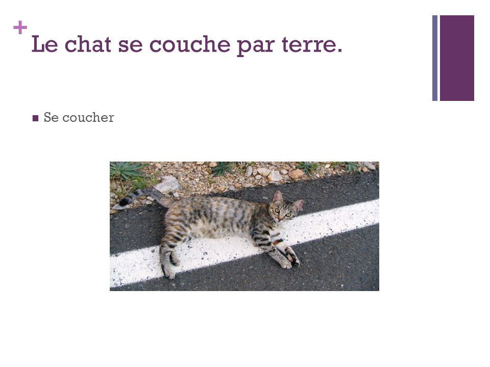 Le chat se couche par terre.