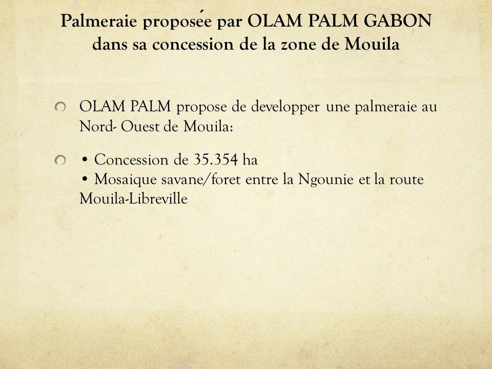 Palmeraie proposée par OLAM PALM GABON dans sa concession de la zone de Mouila