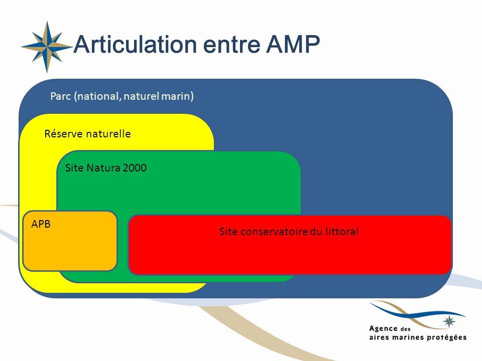 Articulation entre AMP