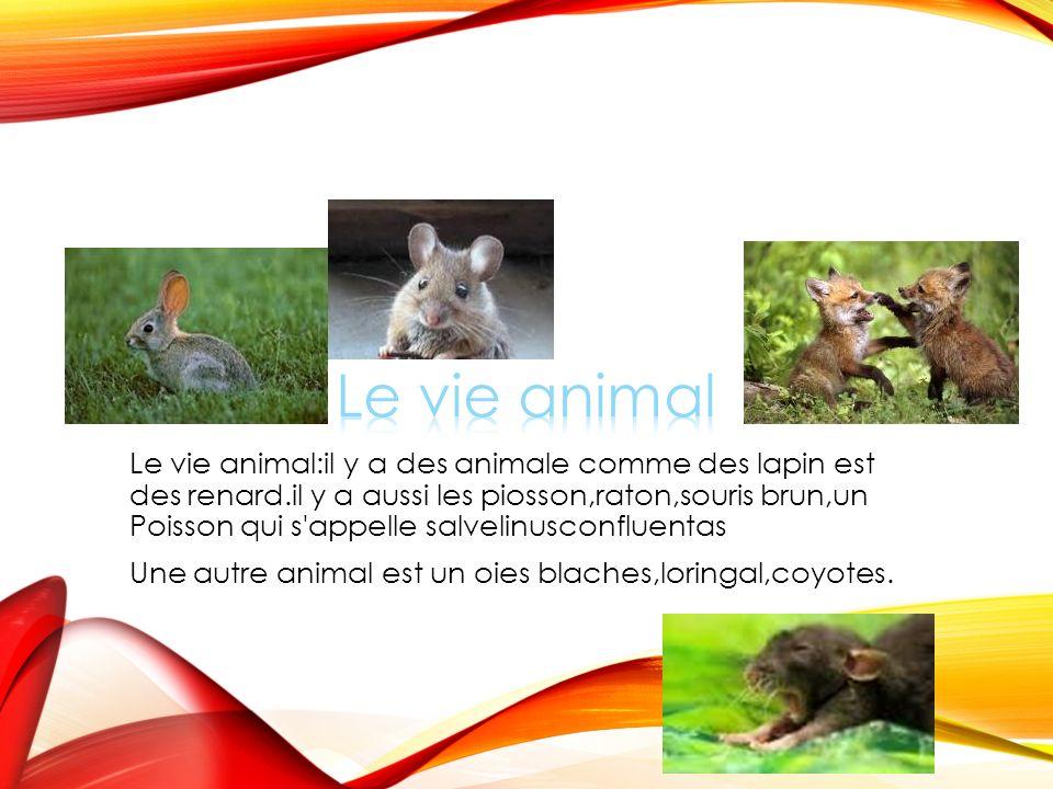 Le vie animal