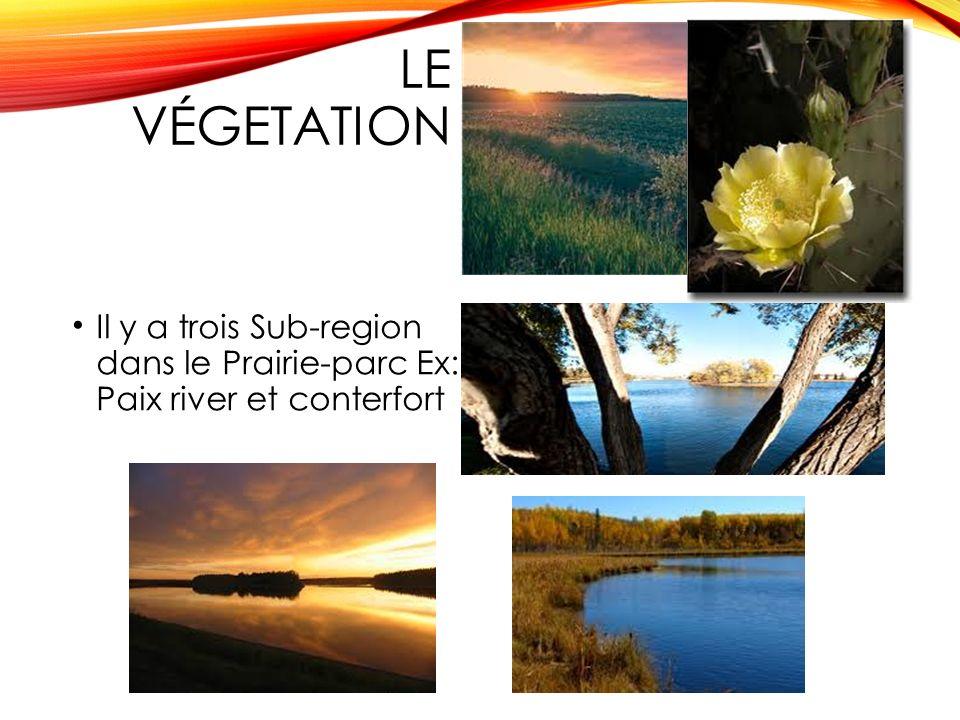 Le végetation Il y a trois Sub-region dans le Prairie-parc Ex: Paix river et conterfort