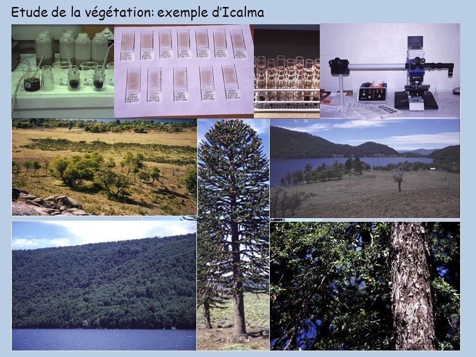Etude de la végétation: exemple d'Icalma