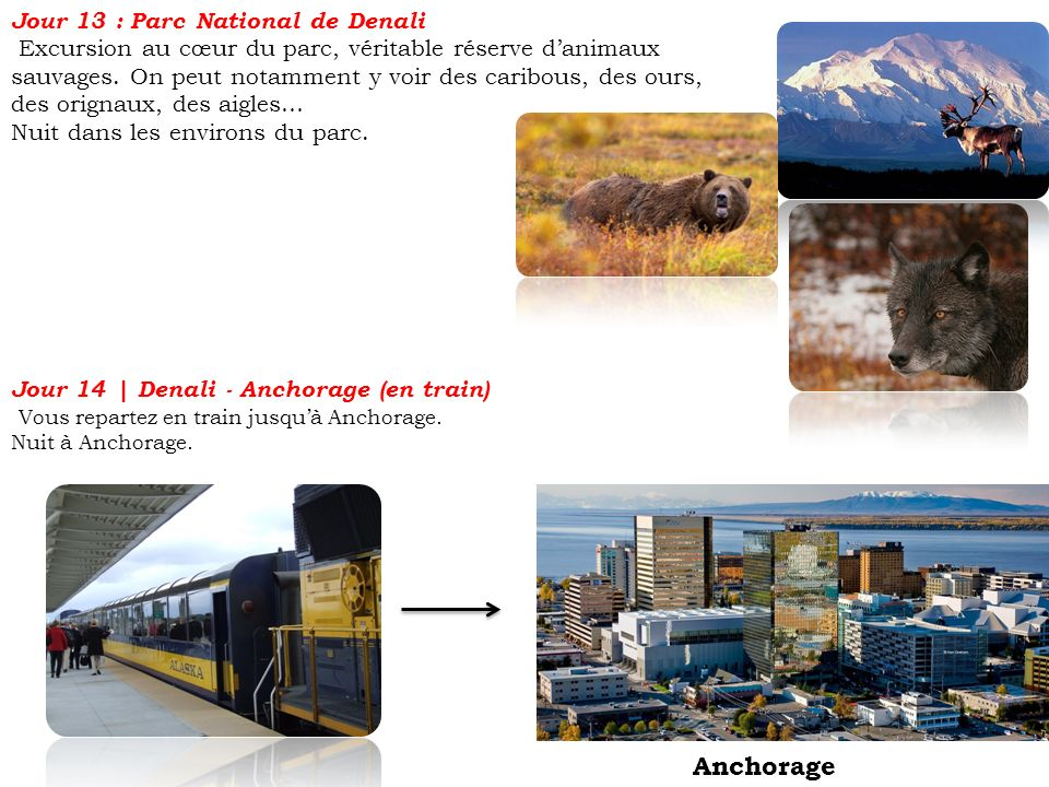 Anchorage Jour 13 : Parc National de Denali
