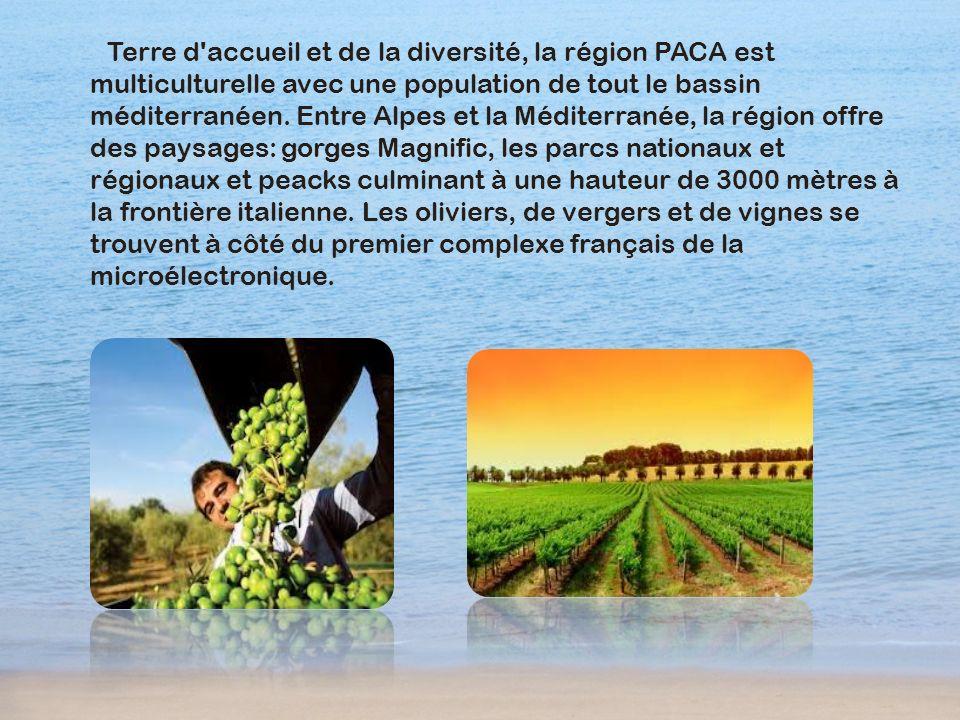 Terre d accueil et de la diversité, la région PACA est multiculturelle avec une population de tout le bassin méditerranéen.