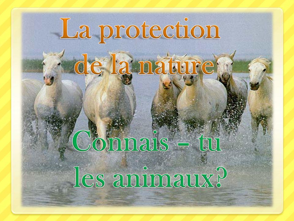 La protection de la nature Connais – tu les animaux