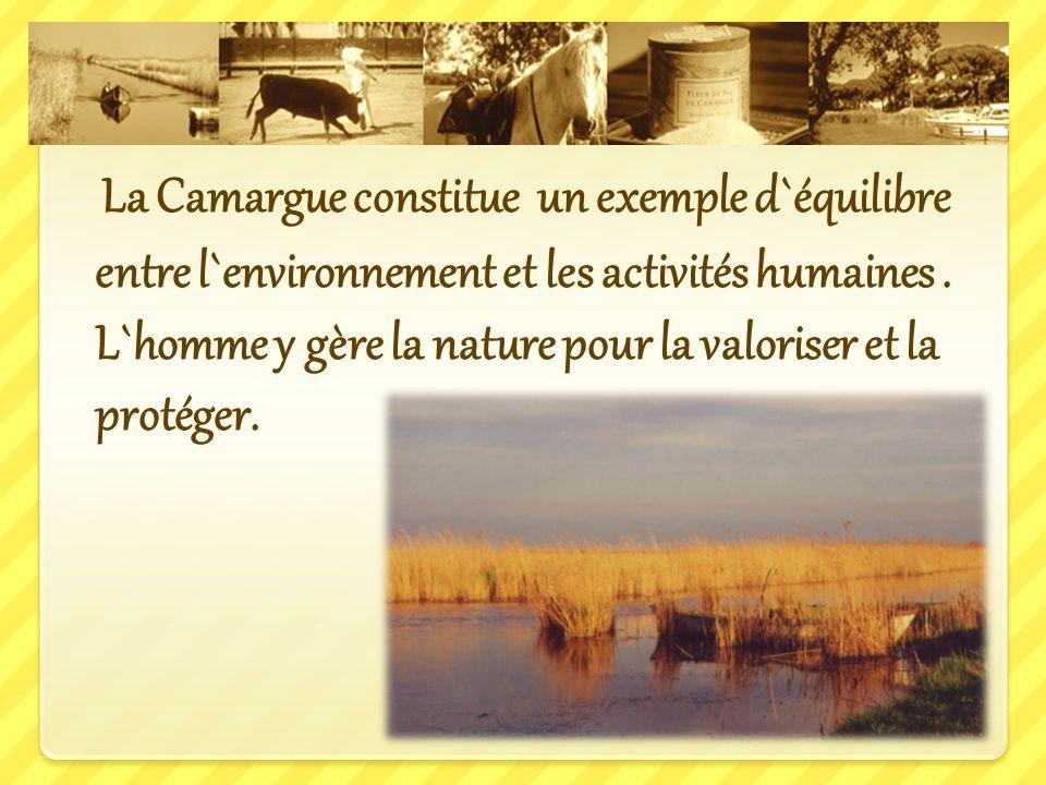 La Camargue constitue un exemple d`équilibre entre l`environnement et les activités humaines .