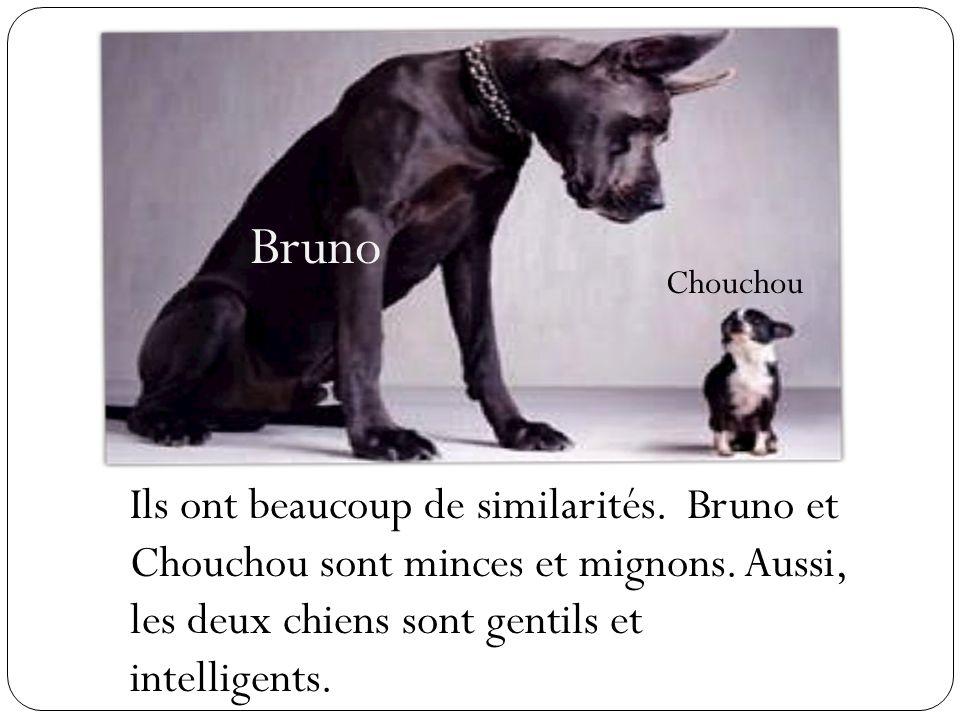 Bruno Chouchou. Ils ont beaucoup de similarités.