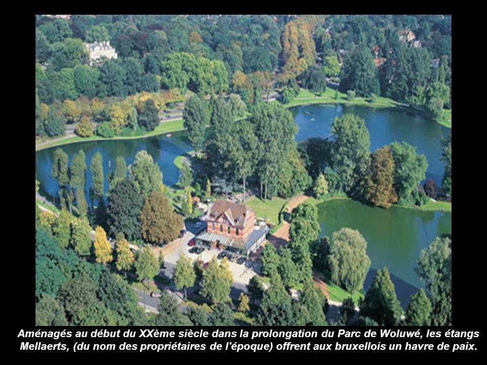 Aménagés au début du XXème siècle dans la prolongation du Parc de Woluwé, les étangs Mellaerts, (du nom des propriétaires de l époque) offrent aux bruxellois un havre de paix.