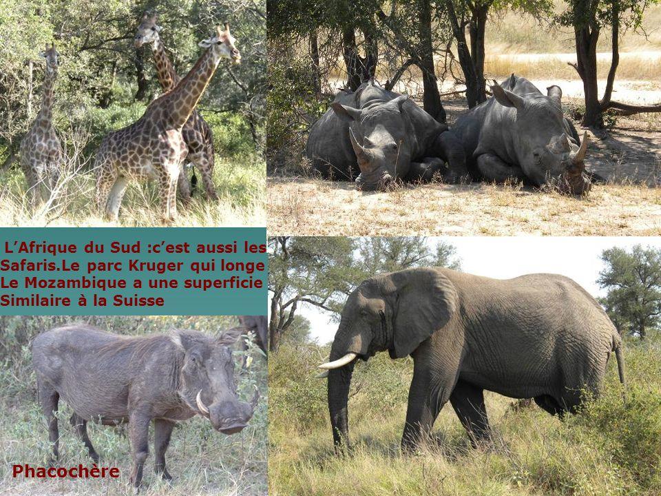 Phacochère Safaris.Le parc Kruger qui longe