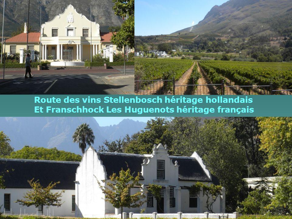 Route des vins Stellenbosch héritage hollandais