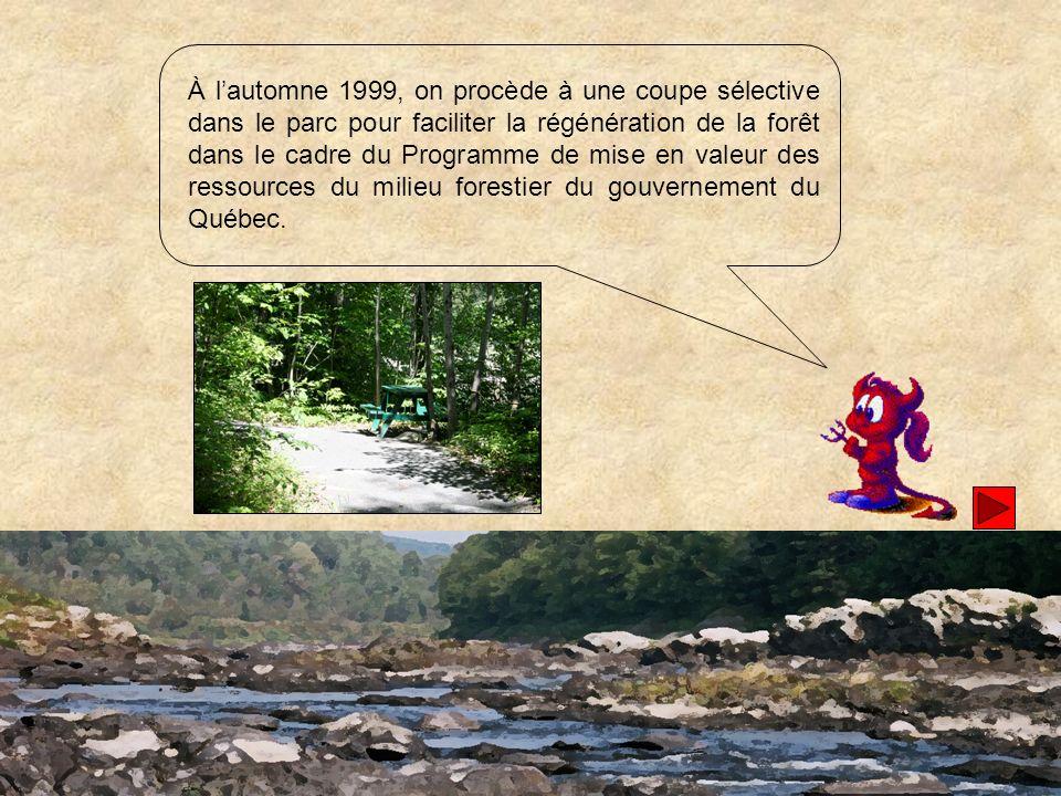 À l'automne 1999, on procède à une coupe sélective dans le parc pour faciliter la régénération de la forêt dans le cadre du Programme de mise en valeur des ressources du milieu forestier du gouvernement du Québec.