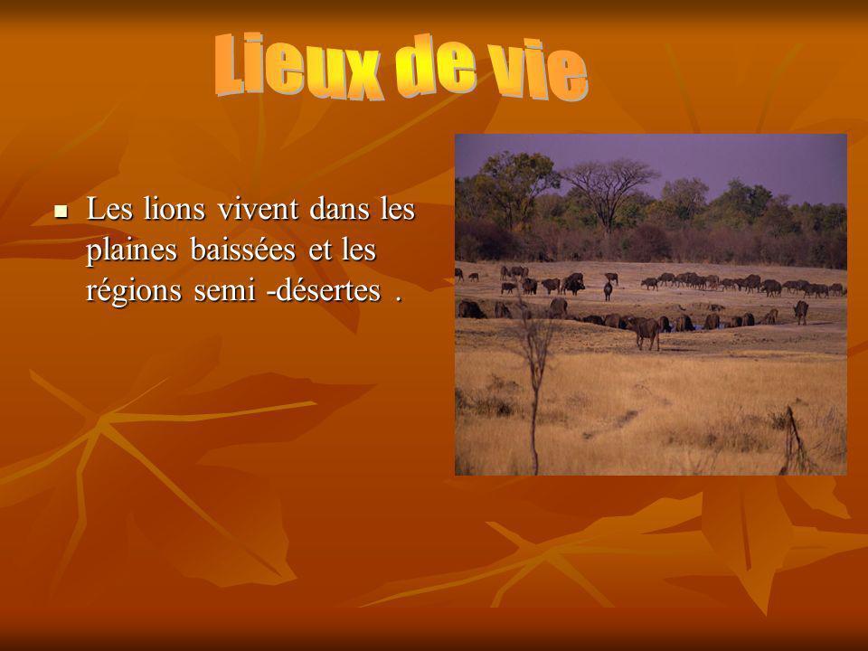 Lieux de vie Les lions vivent dans les plaines baissées et les régions semi -désertes .