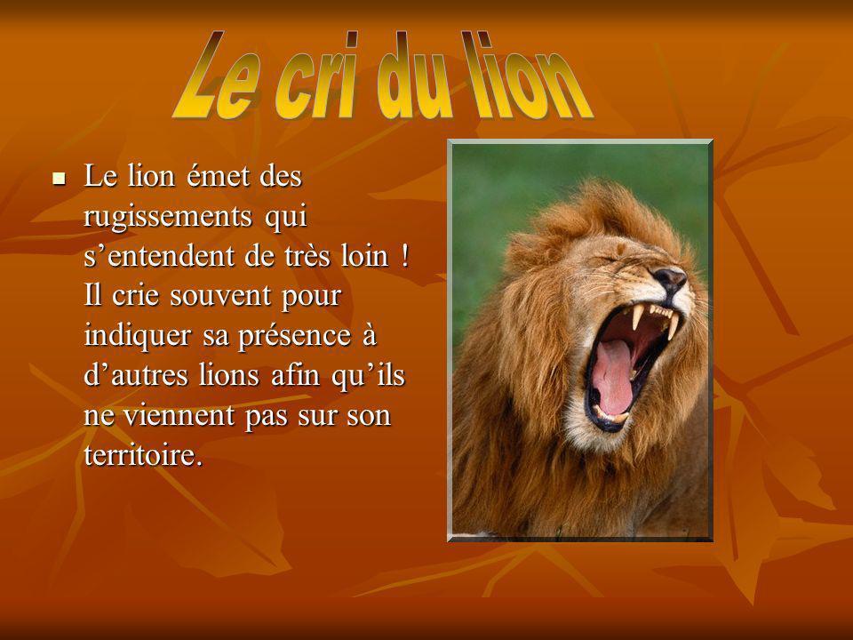 Le cri du lion