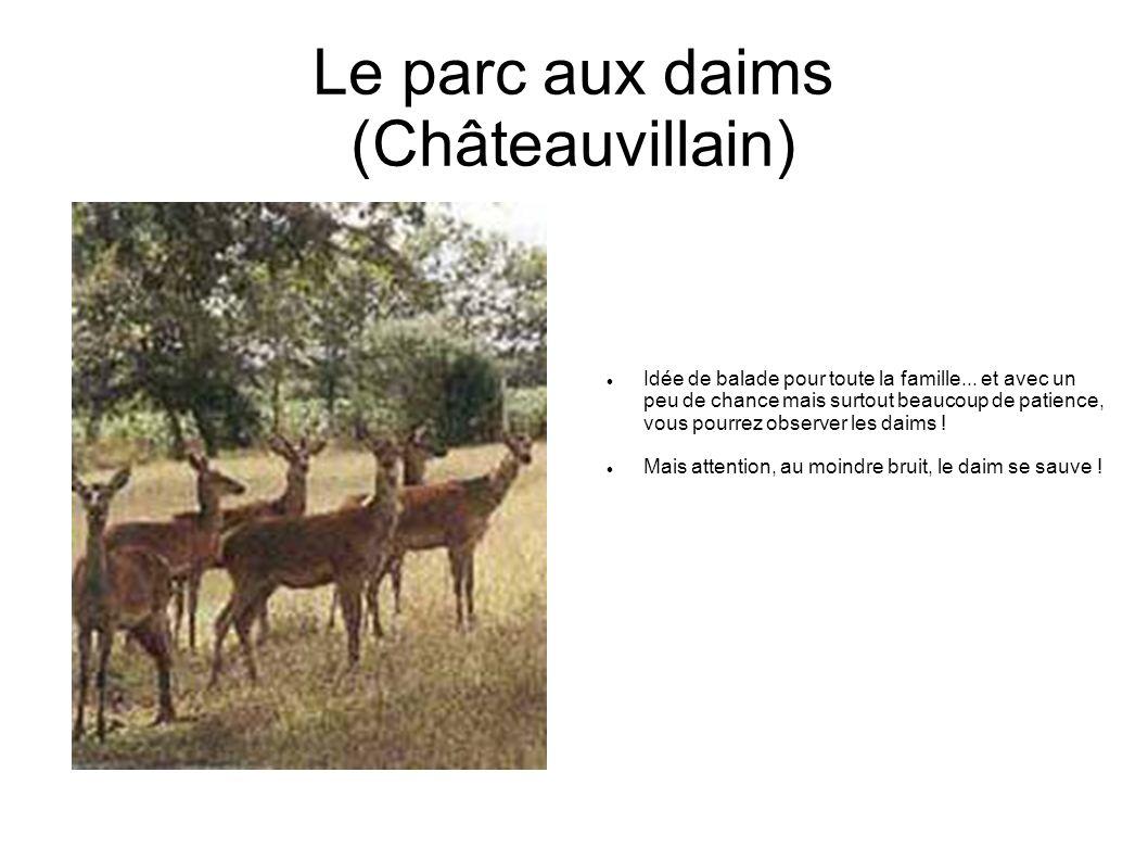 Le parc aux daims (Châteauvillain)