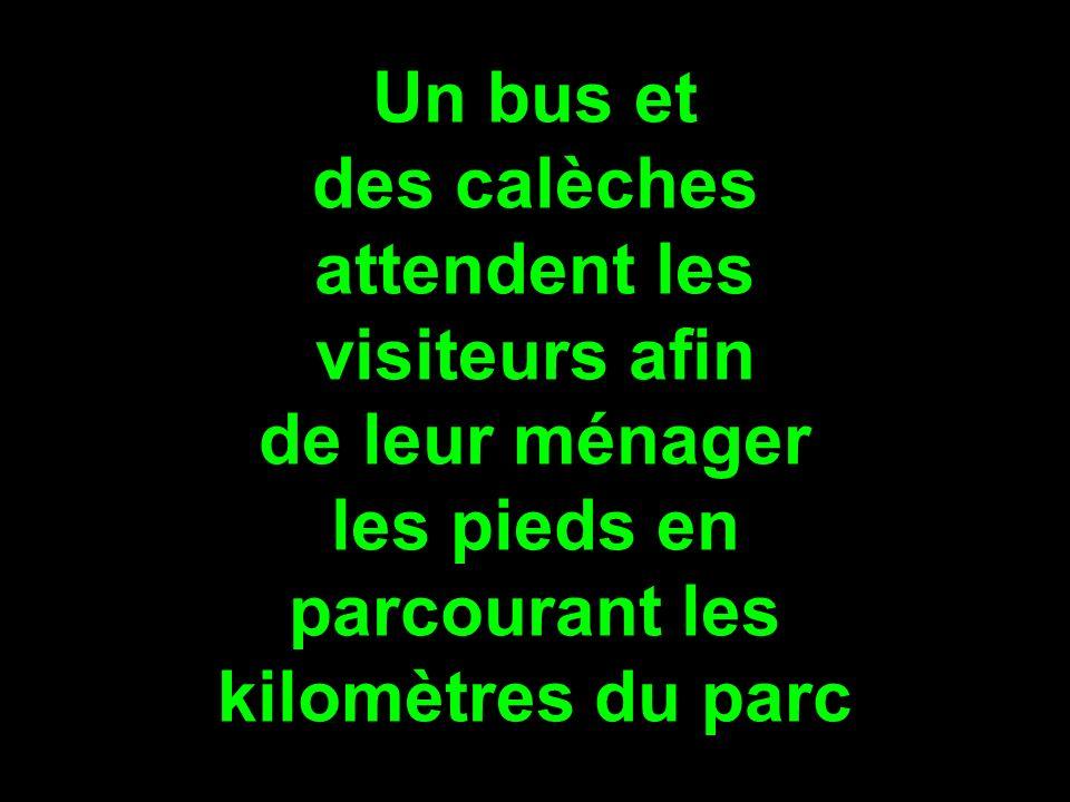 Un bus et des calèches. attendent les. visiteurs afin. de leur ménager. les pieds en. parcourant les.