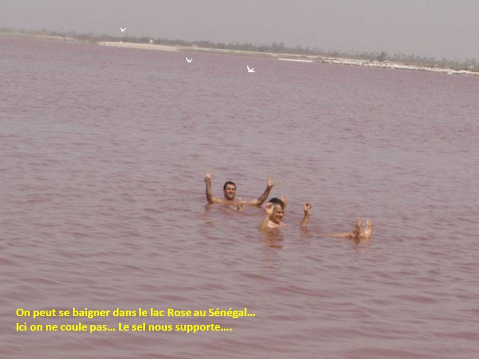 On peut se baigner dans le lac Rose au Sénégal…