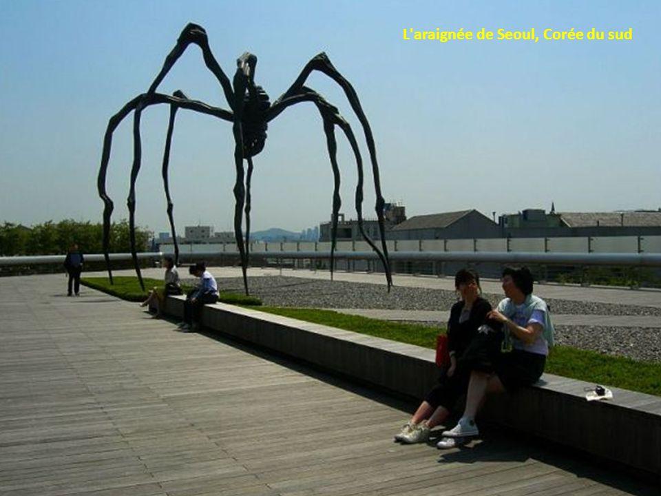 L araignée de Seoul, Corée du sud