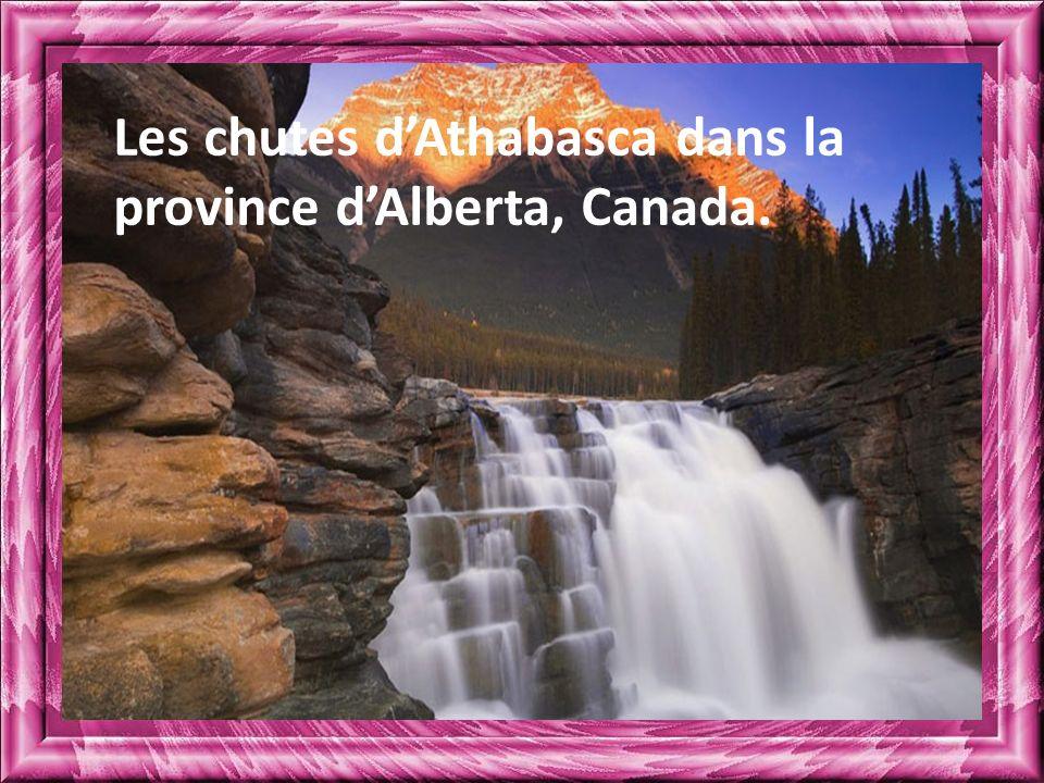 Les chutes d'Athabasca dans la province d'Alberta, Canada.