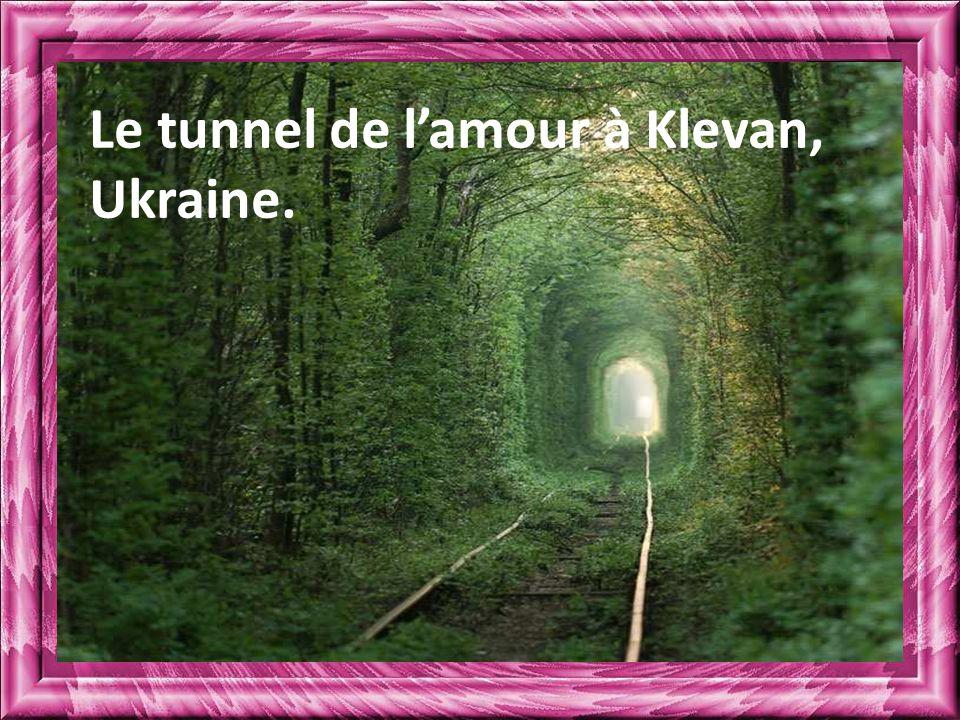Le tunnel de l'amour à Klevan, Ukraine.