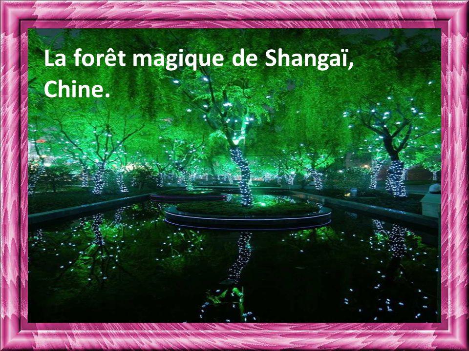 La forêt magique de Shangaï, Chine.