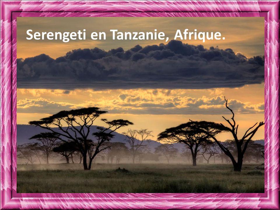 Serengeti en Tanzanie, Afrique.