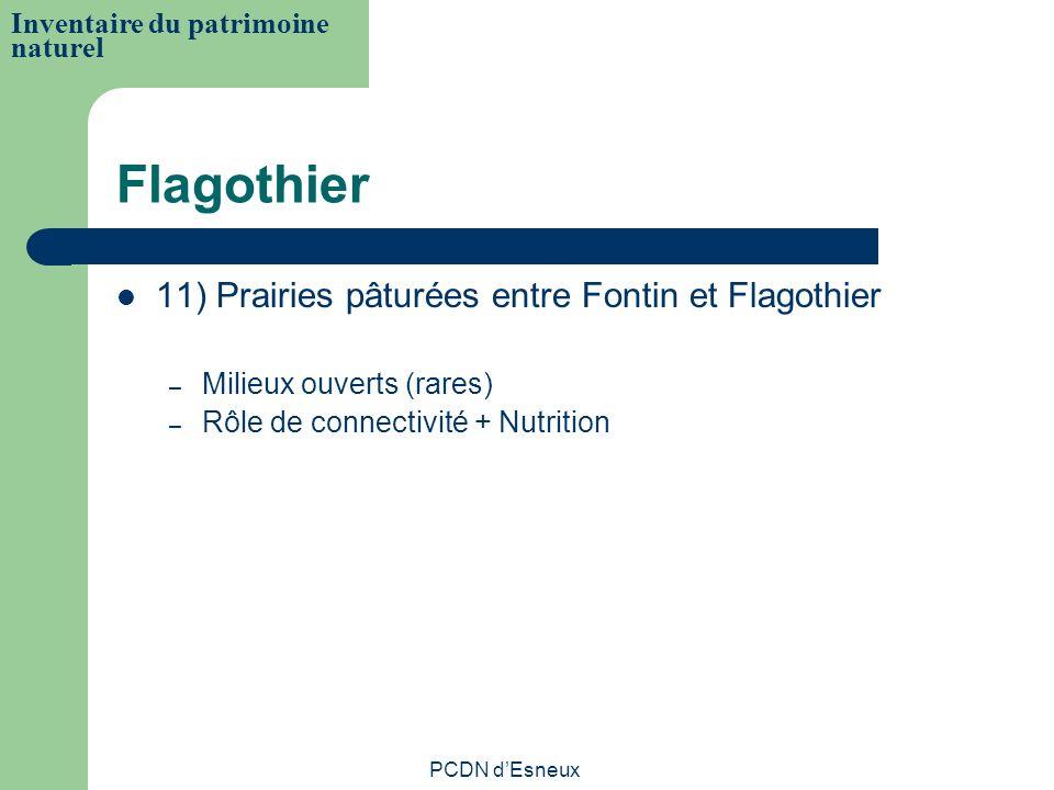 Flagothier 11) Prairies pâturées entre Fontin et Flagothier