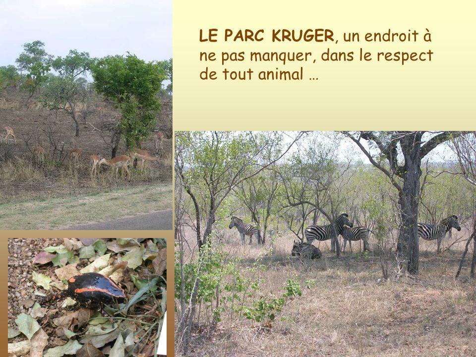 LE PARC KRUGER, un endroit à ne pas manquer, dans le respect de tout animal …