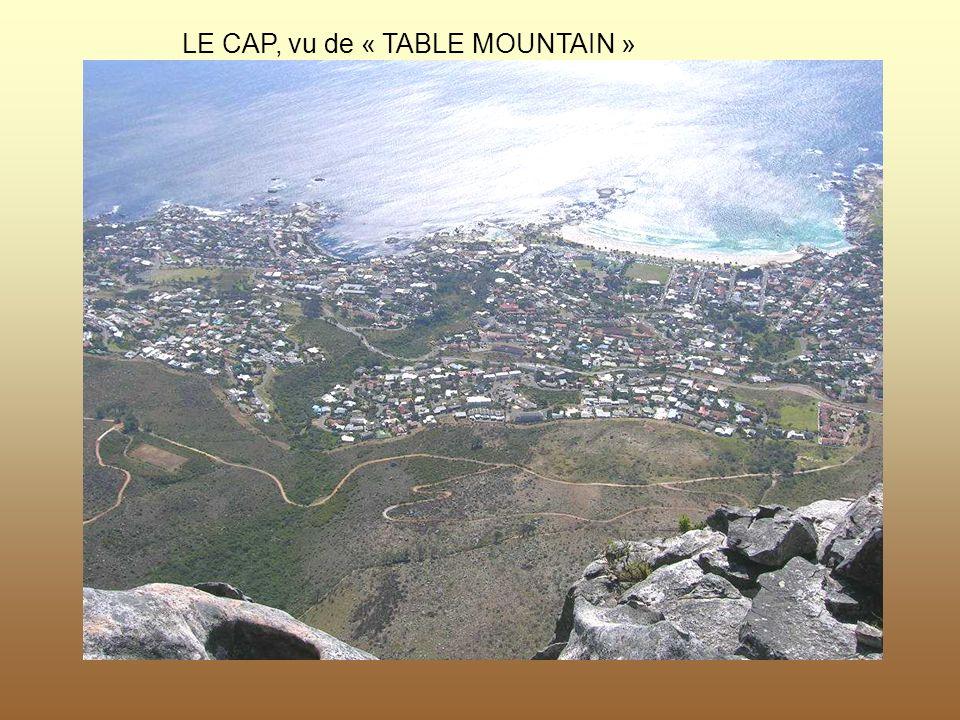 LE CAP, vu de « TABLE MOUNTAIN »