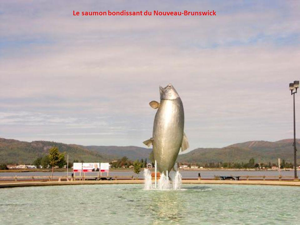 Le saumon bondissant du Nouveau-Brunswick