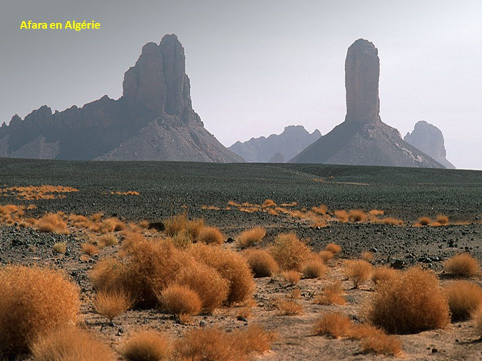 Afara en Algérie