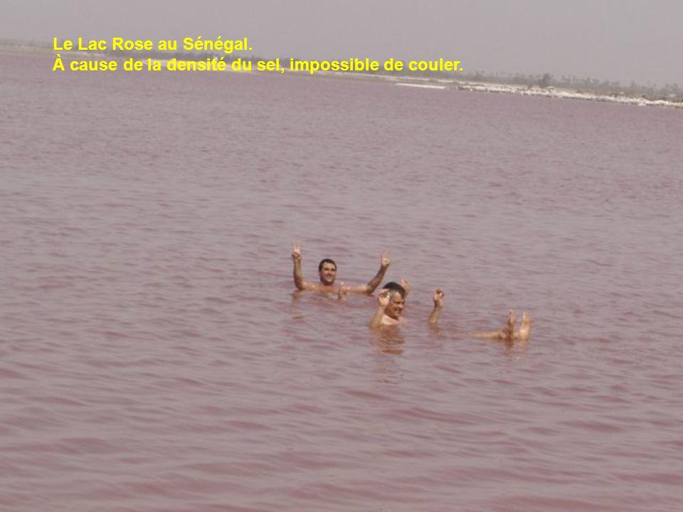 Le Lac Rose au Sénégal. À cause de la densité du sel, impossible de couler.