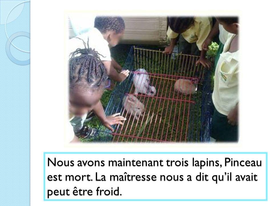 Nous avons maintenant trois lapins, Pinceau est mort