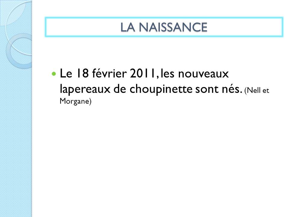 LA NAISSANCE Le 18 février 2011, les nouveaux lapereaux de choupinette sont nés.