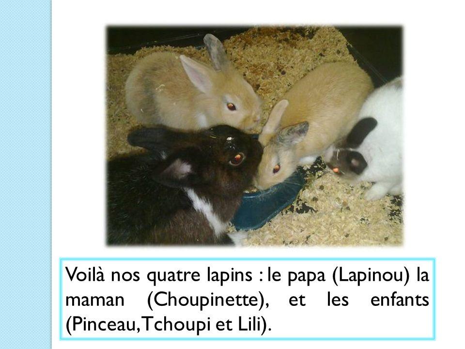 Voilà nos quatre lapins : le papa (Lapinou) la maman (Choupinette), et les enfants (Pinceau, Tchoupi et Lili).