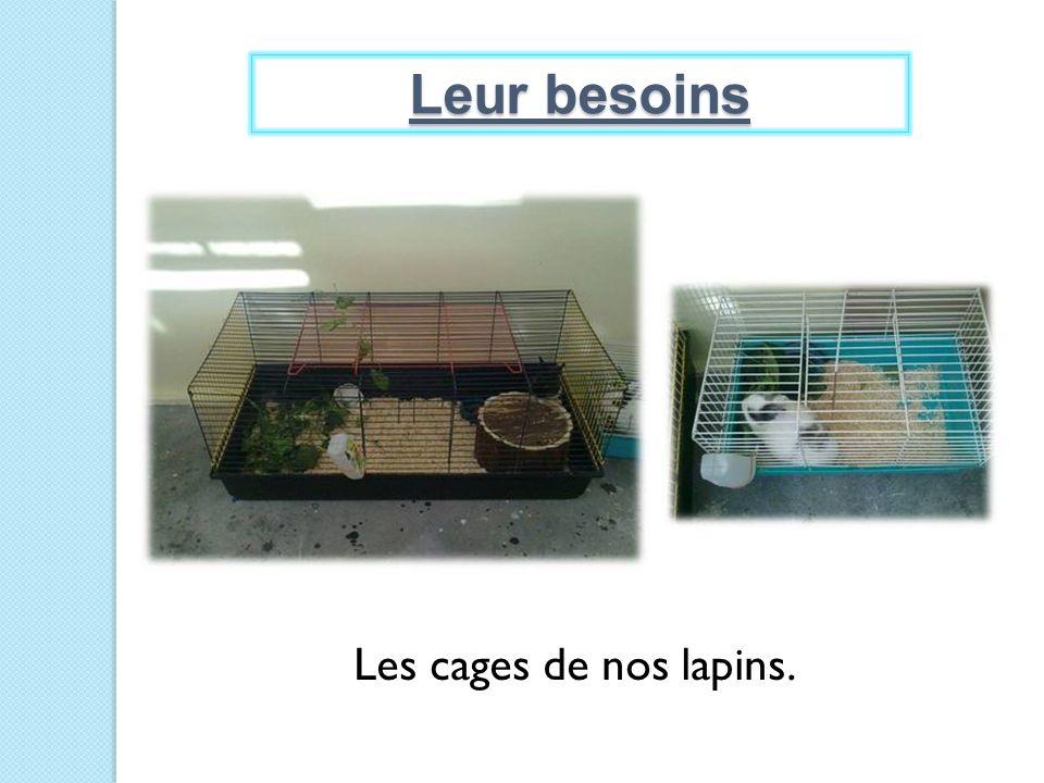 Leur besoins Les cages de nos lapins.