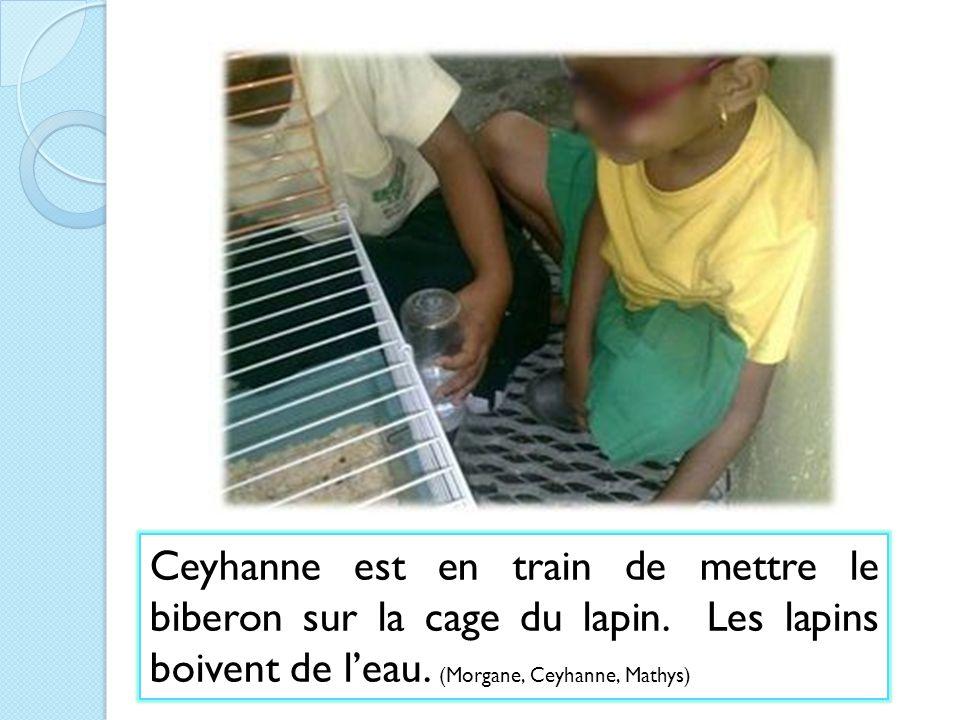 Ceyhanne est en train de mettre le biberon sur la cage du lapin