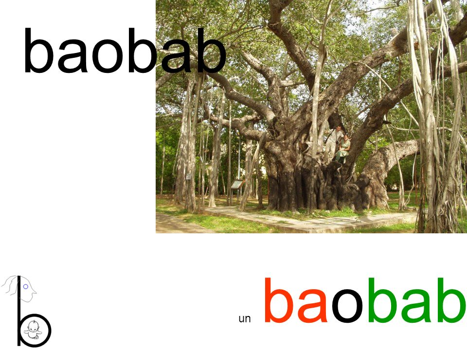 baobab un baobab