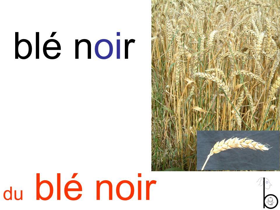 blé noir du blé noir