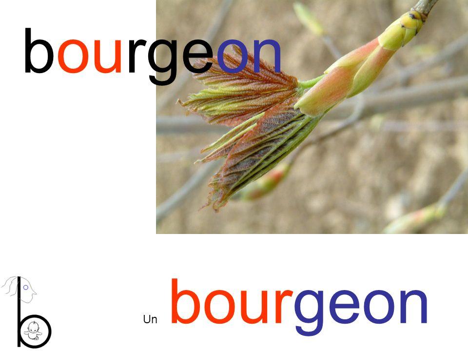 bourgeon Un bourgeon