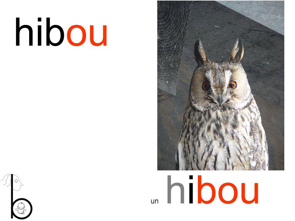hibou un hibou