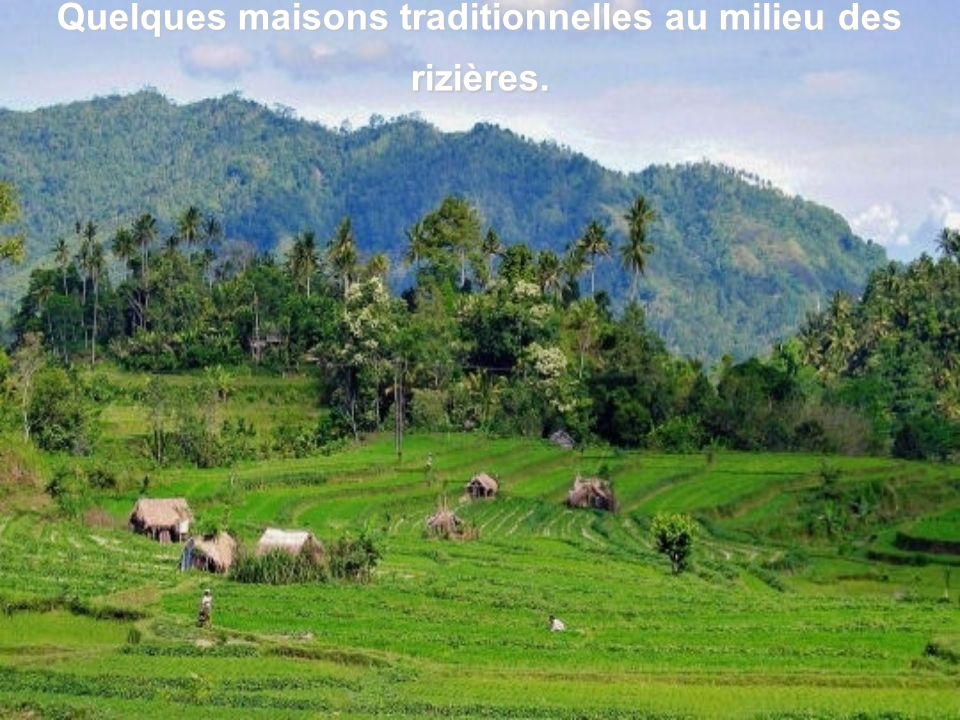 Quelques maisons traditionnelles au milieu des rizières.