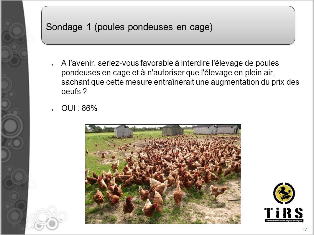 Sondage 1 (poules pondeuses en cage)