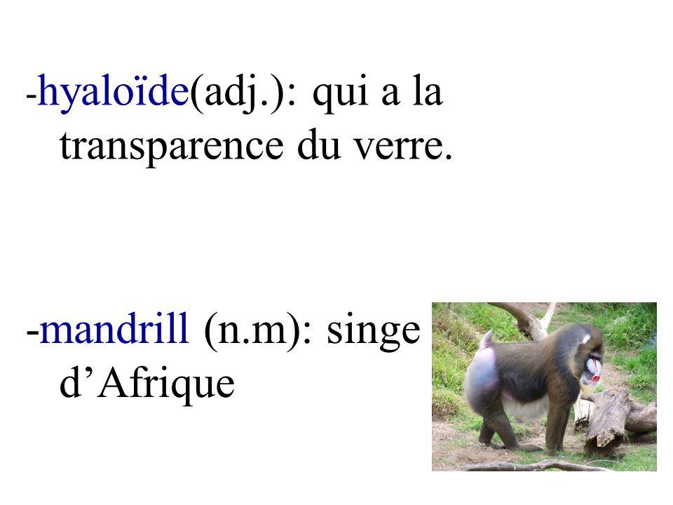 -mandrill (n.m): singe d'Afrique
